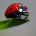 Lutte écologique contre les parasites