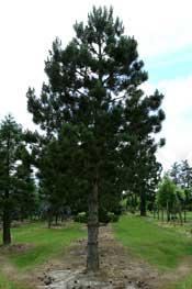 Les périodes pour planter arbres et végétaux