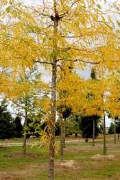 Municipalités, confiez-nous vos plantations d'arbres