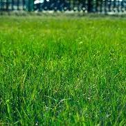 Supprimer la mousse de sa pelouse