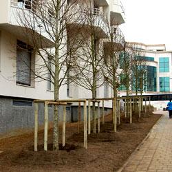 Aménagement paysager urbain et plantation d'arbres