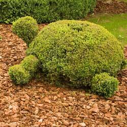 Des espaces verts propres avec le mulching
