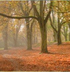 Automne et hiver – entretien espaces verts -Yvelines