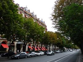 Quels arbres d'alignement ? – Yvelines (78)