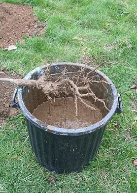 La plantation en racines nues – Paysagistes 78