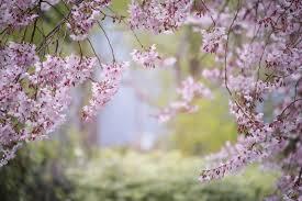 Avec le printemps, le retour des travaux de jardinage !