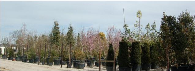 Des arbres en conteneur pour décorer le jardin