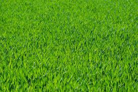 Une belle pelouse dans votre jardin avec Espaces Verts et Jardins