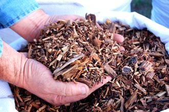 Pose de paillis pour préserver l'humidité du sol
