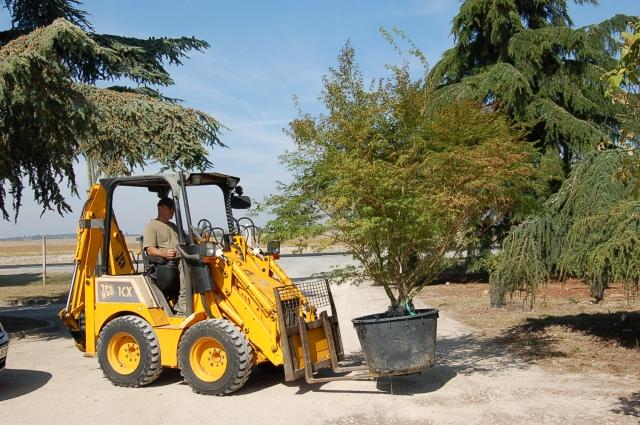 Jardinier pour déplacer un arbre -Yvelines