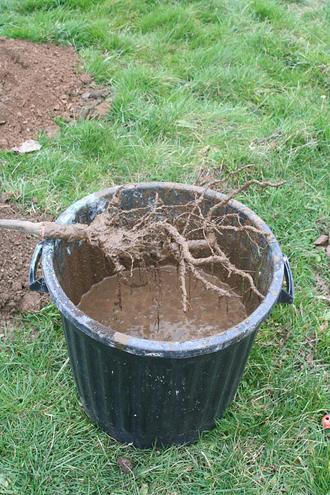 Décembre plantation arbres et arbustes avant le gel (78, 92)