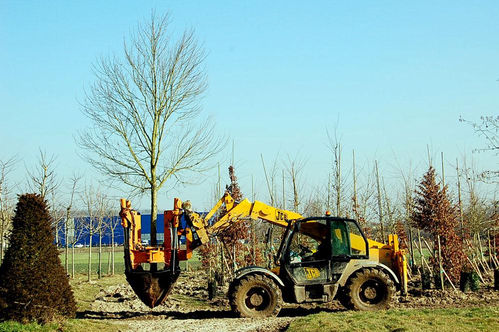 Transplantation arbres en hiver dans les Yvelines
