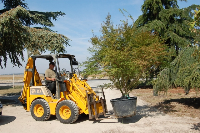 Plantations : choix de l'arbre et de l'emplacement
