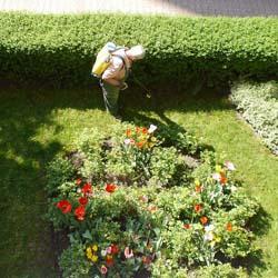 Entretien de Jardin et Espace Vert