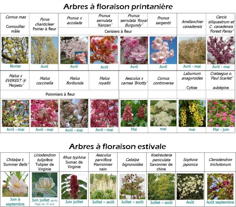 Les arbres et arbustes à floraison spectaculaire