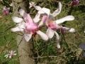 Arbustes fleuris en massif réussi