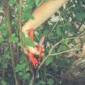 Préparation des Arbres - Reprise des Végétaux