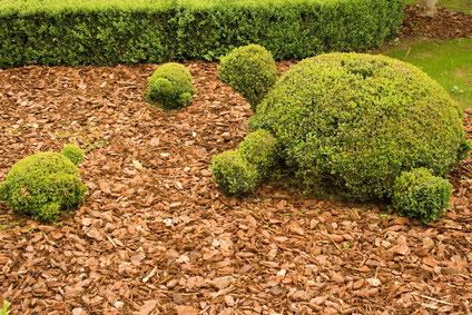 Mulching en écorces de pin pour votre jardin