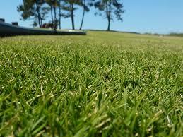 Une belle pelouse instantanément ! Espaces Verts et Jardins
