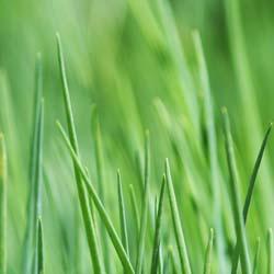 Entretenez votre gazon avec Espaces Verts et Jardins