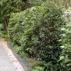 Aménagement de haies d'arbustes pour jardins