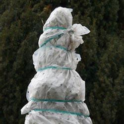 Vos arbres et massifs sont-ils protégés pour l'hiver ?