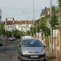 Plantation d'arbres en ville avec Espaces Verts & Jardins