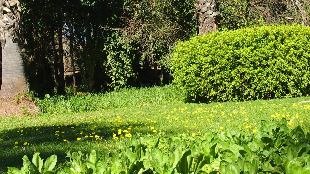 Espaces Verts et Jardins entretient vos espaces verts