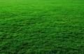 Espaces Verts et Jardins tond votre pelouse