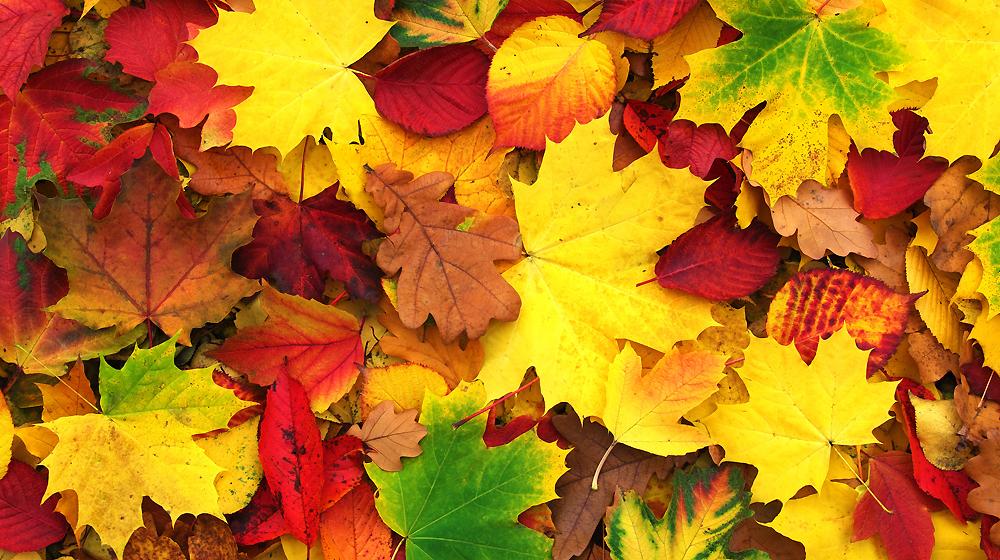 Entretien d\'automne